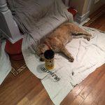 Benji is watching paint dry