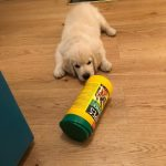 Big Wipes and a puppy